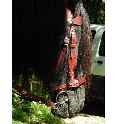 Filet complet pour cheval de type frison